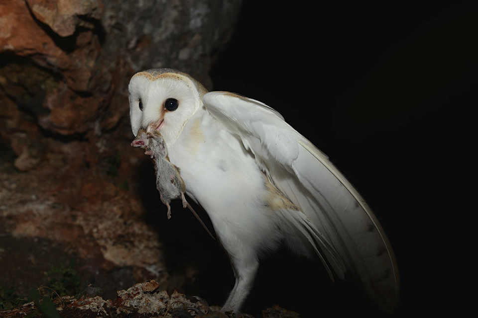 owl-home